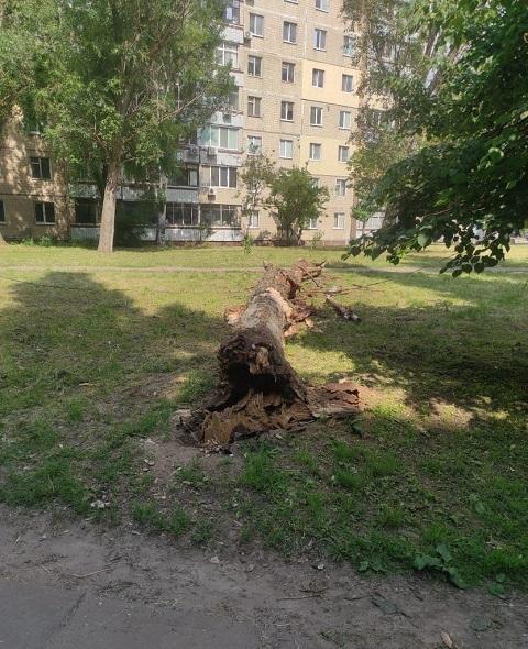 В Каменском возле дома по ул. Харьковской упало дерево Днепродзержинск