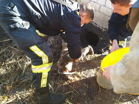 Под г. Каменское спасатели доставали малыша из ямы в туалете Днепродзержинск