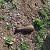 В Заводском районе г. Каменское обнаружили взрывоопасный предмет