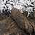 В Каменском обезвредили найденную в Заводском районе мину