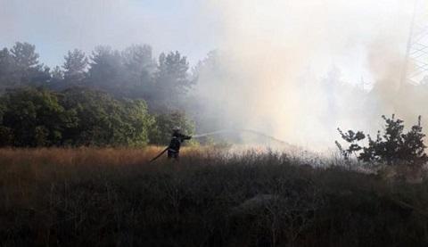 Под г. Каменское ликвидировали лесной пожар Днепродзержинск