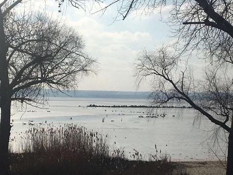 Морозы заперли лебедей на водоеме в Каменском Днепродзержинск