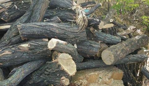 В г. Каменское сотрудники водного патруля задержали мужчин в момент спила деревьев Днепродзержинск