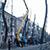Плановую обрезку деревьев провели в Каменском