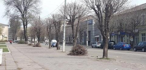 В Каменском обрезают каштаны по проспекту Гимназический Днепродзержинск