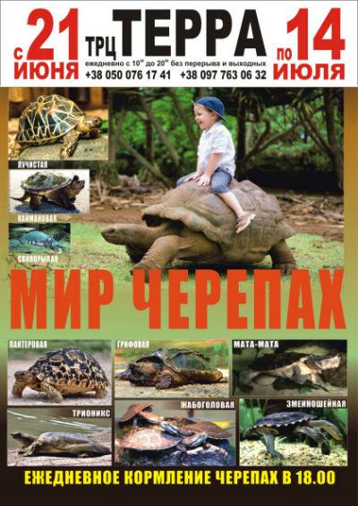 Впервые в Каменском Всемирная выставка черепах! Днепродзержинск
