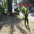 В Каменском проводят работы по борьбе с карантинными травами