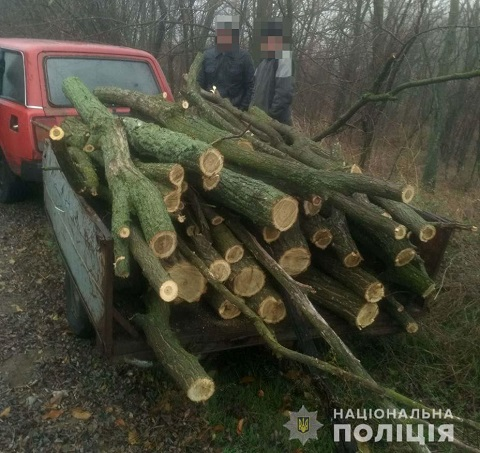 Под г. Каменское правоохранители прекратили незаконную рубку леса Днепродзержинск