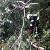 Под г. Каменское спасатели убрали с дороги аварийное дерево