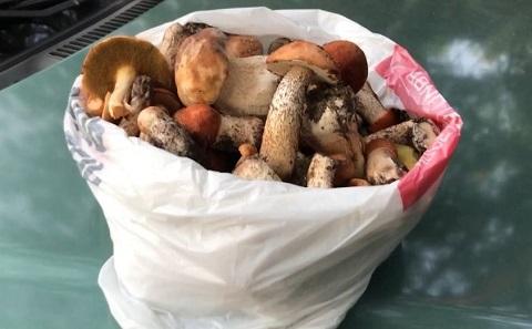 В Каменском начался грибной сезон Днепродзержинск