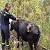 Спасатели г. Каменское помогли вытащить из ямы корову