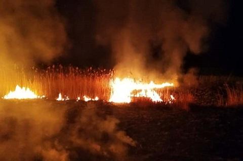 Под г. Каменское горел камыш и сухая трава  Днепродзержинск