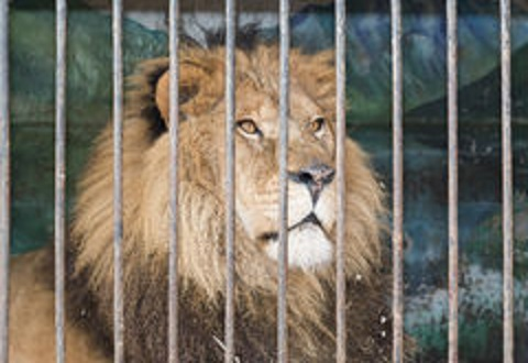 В г. Каменское запретили деятельность передвижных цирков с животными Днепродзержинск