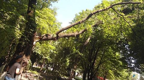 Спасатели Каменского убрали аварийное дерево с территории больницы Днепродзержинск