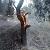 Под г. Каменское ликвидировали возгорание в лесу