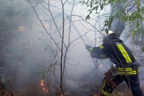 Под г. Каменское ликвидировали возгорание в лесу Днепродзержинск