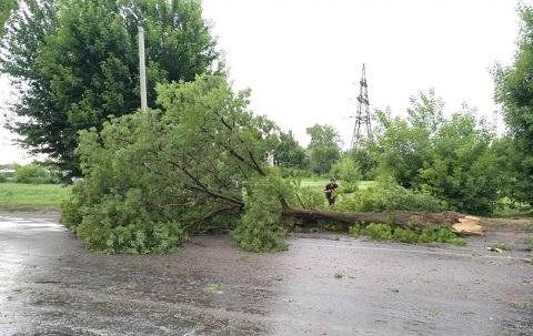 Упавшее дерево затруднило въезд в г. Каменское Днепродзержинск