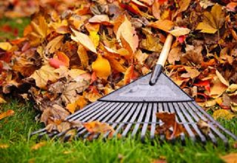 В Каменском продолжат убирать листья до конца декабря Днепродзержинск