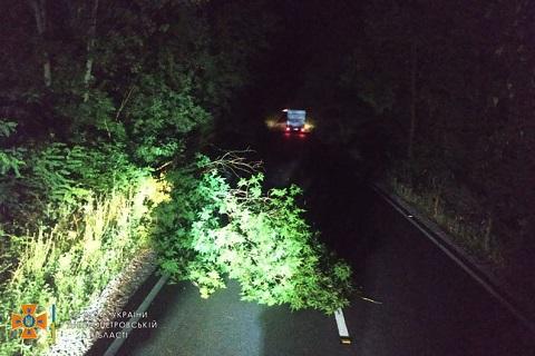 Под Каменским ветер повалил деревья Днепродзержинск