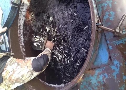 На Каменском водохранилище провели акцию зарыбления Днепродзержинск