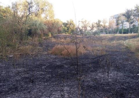 В Каменском в лесопосадке горела сухая трава Днепродзержинск