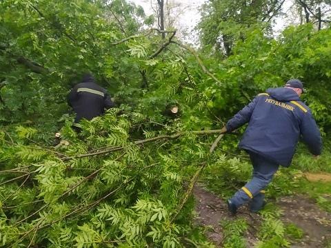 В Каменском районе спасатели убрали с проезжей части дороги упавшее дерево Днепродзержинск