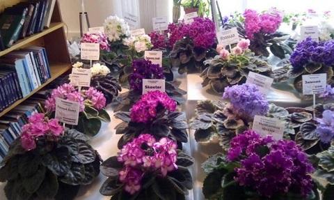Клуб садоводов и цветоводов г. Каменское проводит выставку Днепродзержинск