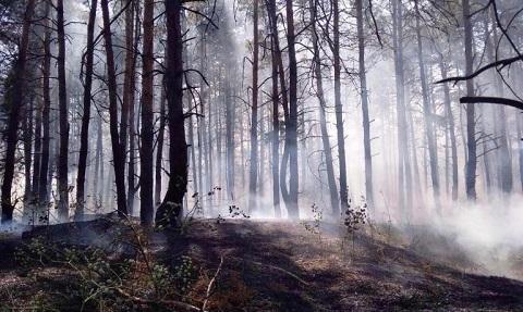 Под городом Каменское горел лес Днепродзержинск