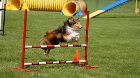 В первый день июля в Каменском откроют специализированную площадку для собак Днепродзержинск