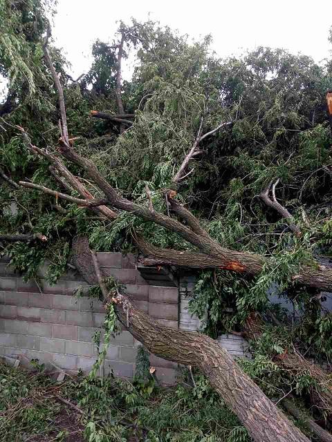 Каменские спасатели убрали дерево, упавшее на крышу жилого дома Днепродзержинск