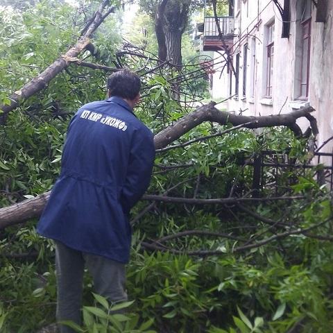 Сотрудники «УКОЖФ» г. Каменское разрешили ситуацию с упавшим старым деревом Днепродзержинск