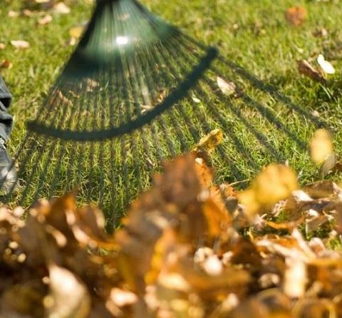 В Каменском объявили месячник уборки листвы Днепродзержинск