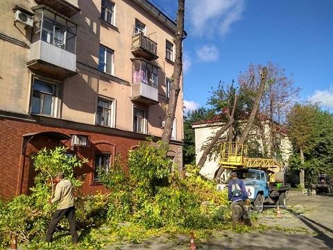 В Каменском проводят осеннее кронирование деревьев Днепродзержинск