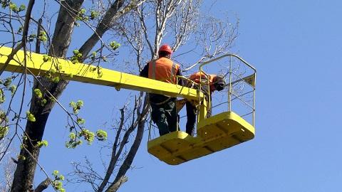 В Каменском обрезают деревья и высаживают кусты Днепродзержинск