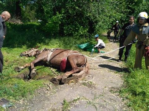 В г. Каменское коня спасали Днепродзержинск