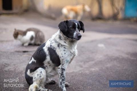 В г. Каменское построят пункт для временного содержания бездомных животных Днепродзержинск