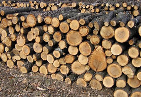 Под Каменским полицейские обнаружили незаконно спиленную древесину Днепродзержинск
