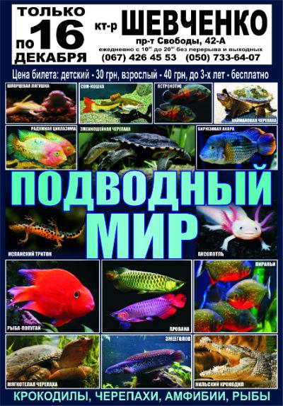 Выставка «Подводный мир» в Каменском работает по 16 декабря Днепродзержинск