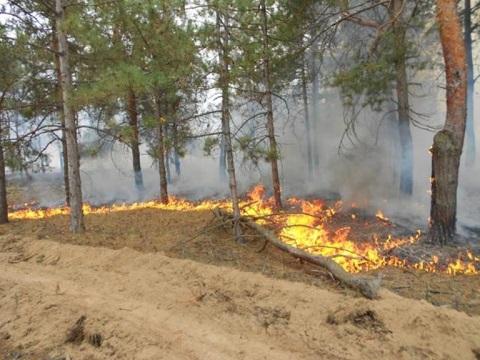 Спасатели Каменского боролись с огнем на открытой местности и в лесничестве Днепродзержинск
