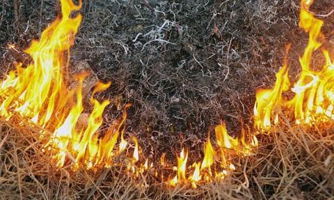 На территории «Каменского лесхоза» ликвидировали пожар Днепродзержинск