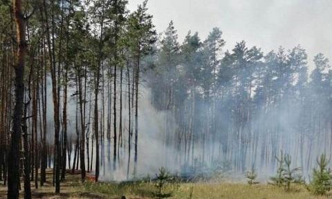 Под городом Каменское спасатели ликвидировали пожар в лесу Днепродзержинск