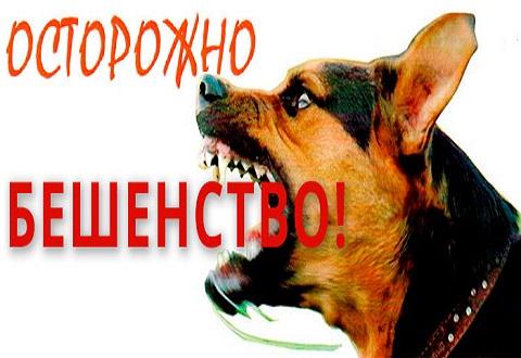 Протиэпизоотическая комиссия городского совета Каменского объявила карантин Днепродзержинск