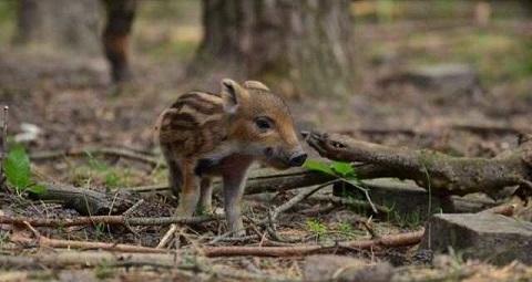 В экосистемах Каменского наступил «сезон тишины» Днепродзержинск