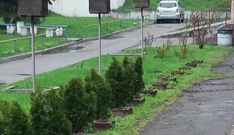 С территории горбольницы № 9 г. Каменское исчезли туи Днепродзержинск