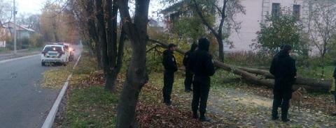 Сотрудники «Муниципальной гвардии» Каменского зафиксировали незаконную вырубку деревьев Днепродзержинск