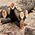 О незаконной вырубке леса под Каменским жители сообщили в полицию